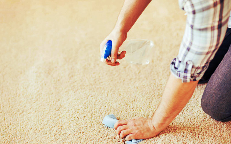cropped image of a man wiping the carpet with bloating paper in one hand and spray bottle in other hand